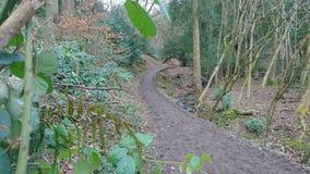 Promenade boueuse de région boisée par le courant Image libre de droits