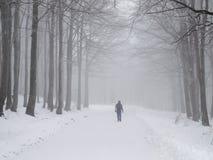 Promenade brumeuse de l'hiver Photographie stock libre de droits
