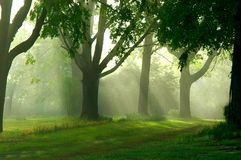 Promenade brumeuse de matin Image libre de droits