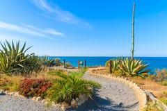 Promenade côtière avec des plantes tropicales Photos libres de droits