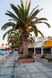Promenade with cafes and palms in Sitia town at eastern part of Crete island, Greece Royalty Free Stock Photos