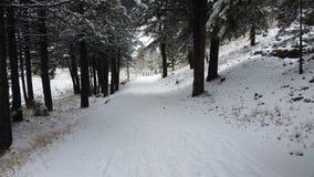 promenade couverte de neige Photos libres de droits