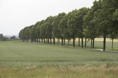 Promenade délimitée par des arbres Photographie stock