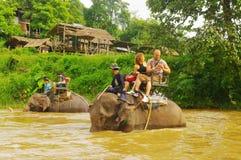 Promenade d'éléphant Photos stock