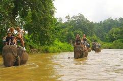 Promenade d'éléphant Photo libre de droits