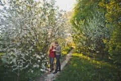 Promenade d'amants parmi les fleurs de cerisier 1445 Photo stock