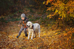 Promenade d'automne avec l'animal familier Photos libres de droits