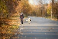 Promenade d'automne avec l'animal familier Image libre de droits