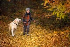 Promenade d'automne avec l'animal familier Photo libre de droits