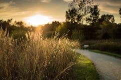 Promenade d'automne parmi l'herbe grande Photos stock