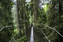 Promenade d'auvent de jardin botanique d'UBC Photos stock