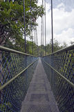 Promenade d'auvent par la forêt tropicale Photos stock
