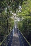 Promenade d'auvent par la forêt tropicale Photographie stock libre de droits