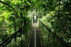 Promenade d'écran de forêt humide Images libres de droits