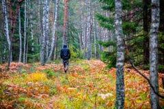 promenade d'homme en bois de chute photographie stock libre de droits