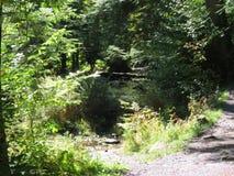 Promenade dans la forêt images stock