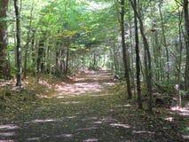 Promenade dans la forêt photos stock