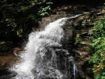 Promenade dans la forêt photographie stock