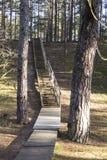 Promenade dans la forêt Image libre de droits