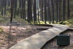 Promenade dans la forêt Photographie stock libre de droits