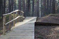 Promenade dans la forêt Photo libre de droits