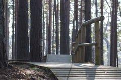 Promenade dans la forêt Photos libres de droits