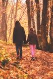Promenade dans la forêt d'automne photos stock