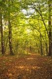 Promenade dans la forêt d'automne Photo stock