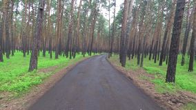 Promenade dans la forêt de pin clips vidéos
