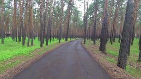 Promenade dans la forêt de pin banque de vidéos