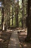 Promenade dans la forêt estonienne Photo libre de droits