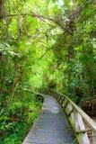 Promenade dans la forêt tropicale dense image libre de droits