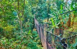 Promenade dans la forêt tropicale profonde, promenade supérieure d'arbre, jardin de Mae Fah Luang, Doi Tung, Thaïlande photo libre de droits