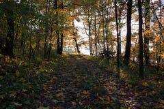 Promenade dans le Forrest photographie stock libre de droits