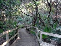 Promenade dans les bois Photos stock