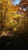 Promenade dans les bois Photographie stock libre de droits