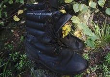 Promenade dans les bois en vert Photo libre de droits