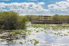 Promenade dans les marais Images stock