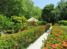 Promenade dans un jardin maldivien photo stock
