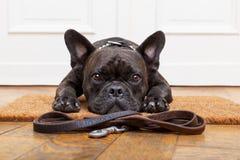 Promenade de attente de chien Images libres de droits