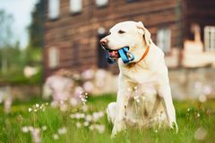 Promenade de attente de chien mignon photo libre de droits