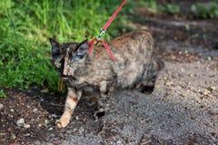 Promenade avec un chat Image stock