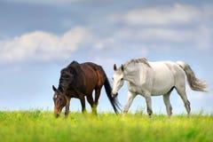 Promenade de cheval sur le pâturage photos libres de droits
