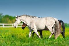 Promenade de cheval sur le pré image libre de droits