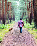 Promenade de chienchien dans la forêt Photographie stock