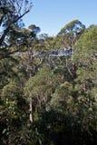 Promenade de dessus d'arbre Image libre de droits