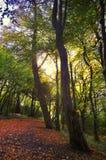 Promenade de forêt photos stock