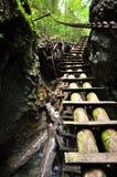 Promenade de forêt dans le paradis de la Slovaquie Images libres de droits