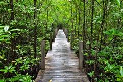 Promenade de forêt de palétuvier Images stock