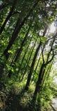 Promenade de forêt de Wyre Photographie stock